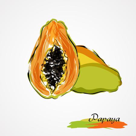 grope: Hand drawn vector ripe papaya fruit on light background