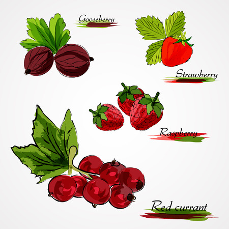 Set of hand drawn vector ripe whole fruits, gooseberry, strawberry, raspberry and red currant on light background Ilustração