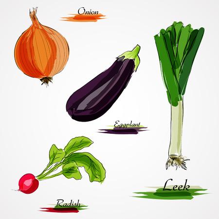vegatables: Set of hand drawn vector ripe whole vegetables, llek, white onion, eggplant and radish on light background