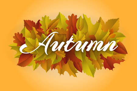 fall, autumn decoration, frame with colorful leaves on light background Vectores