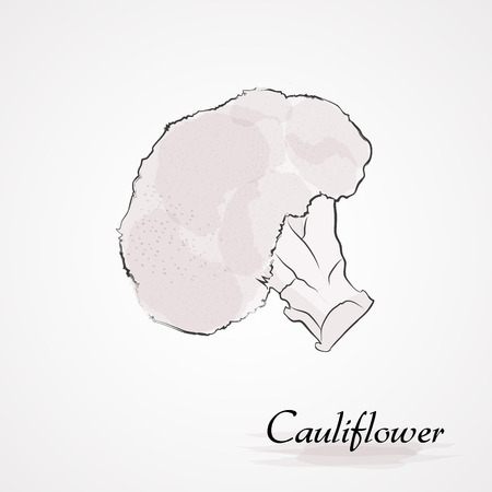 Hand drawn vector whire cauliflower vegetable on the light background Vectores