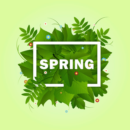 Spring white frame with green different leaves and colorful flowers on light green background Vectores