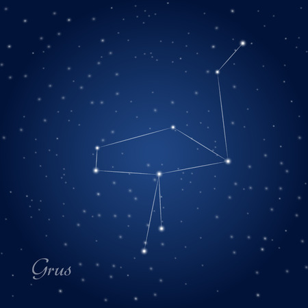 Grus, Crane constellation at a starry night sky Vectores