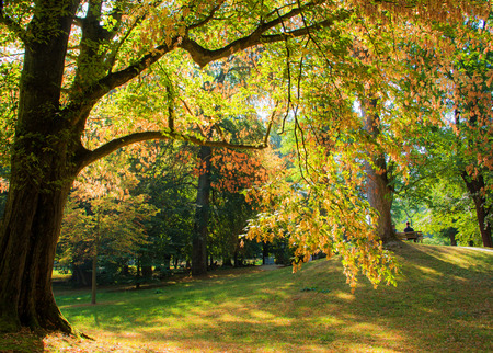 autumn on a sunny day in a park