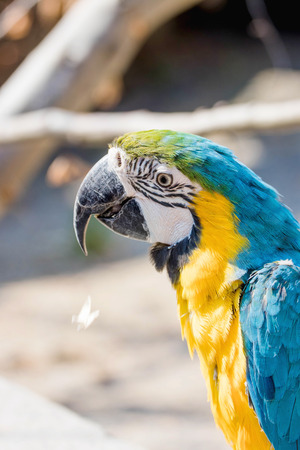 Portrait of a beautiful blue yellow macaw