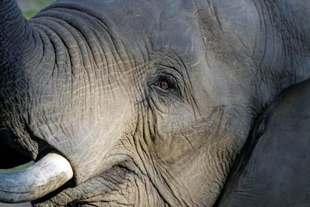 close up of an elephant Фото со стока
