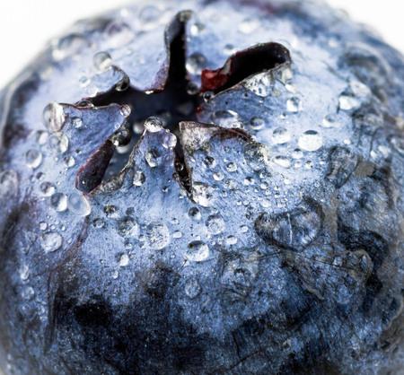 macro fresh blueberry with water drops Фото со стока