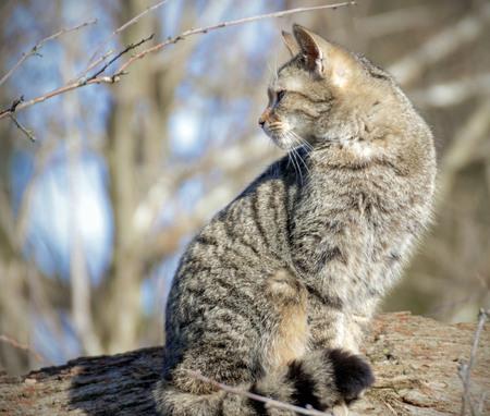 wild cat on a tree trunk