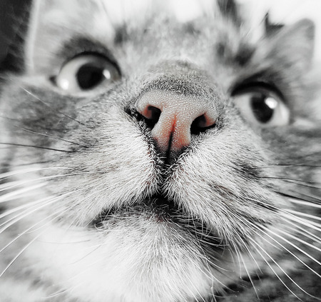 close up of a gray cat