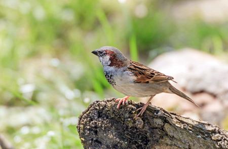 Little bird on a tree trunk Фото со стока