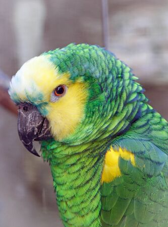 Beautiful green yellow parrot in a park