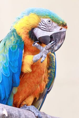 Colorful macaw parrot in a park