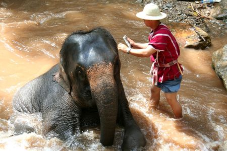Elephant being bathed by its handler, Thailand photo