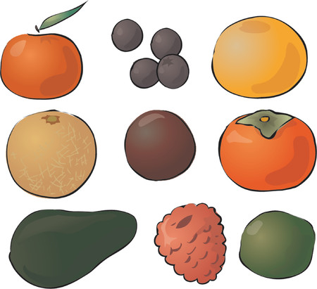 Illustration of fruits, hand-drawn look: tangerine, blueberries, grapefruit, melon, passionfruit, persimmon, avocado, raspberry, lime Vector