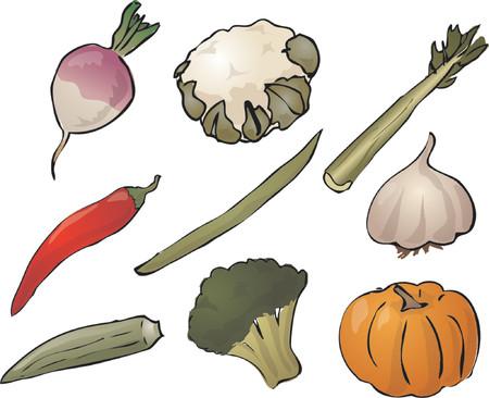 Illustration of vegetables, hand-drawn look: turnip, cauliflower, celery, chilli, stringbean, garlic, okra, brocolli, pumpkin. Vector illustration Vector