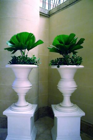 A pair of potted plants white ceramic photo