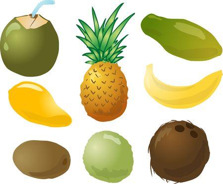 pine apple: Illustration of tropical fruits, hand-drawn look: young green coconut, pinapple, papaya, mango, banana, kiwi, guava, coconut