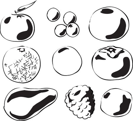 Black and white lineart Illustration of fruits, hand-drawn look: tangerine, blueberries, grapefruit, melon, passionfruit, persimmon, avocado, raspberry, lime illustration