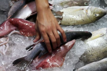 Fresh raw seafood on ice for sale photo
