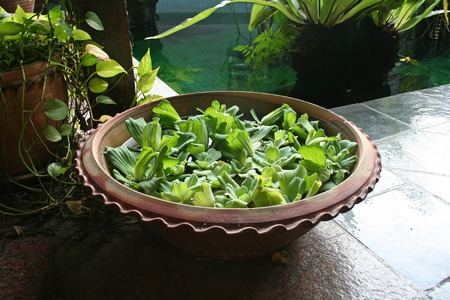 Pot with floating plants in Balinese arcitectural style photo