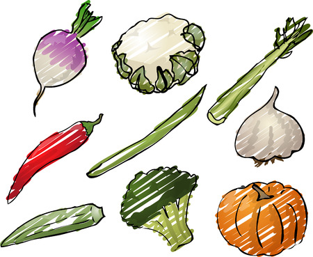 cauliflower: Illustration of vegetables, hand-drawn look: turnip, cauliflower, celery, chilli, stringbean, garlic, okra, broccoli, pumpkin. Vector illustration rough sketchy coloring Stock Photo