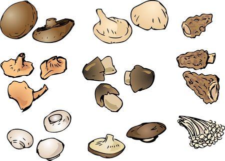 morel: Hand-drawn illustration clipart of mushrooms portobello button morel shitake enoki chanterelle straw oyster