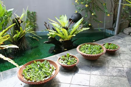 architectural style: Pot with floating plants in Balinese architectural style Stock Photo
