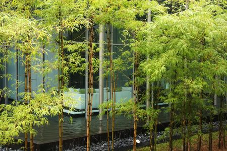 Modern zen decor home with bamboo greenery and water photo