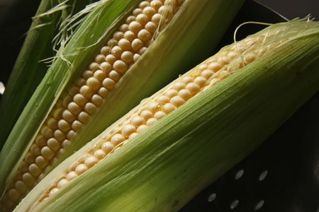 Whole fresh raw corn on the cob with husk photo