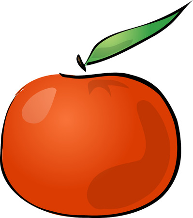 Tangerine fruit, hand drawn colored lineart illustration Vector