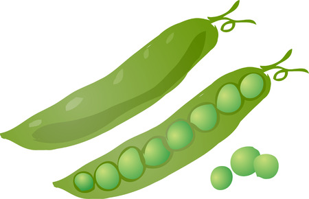 minerals food: Sketch of peas in a pod Hand-drawn lineart look illustration Illustration