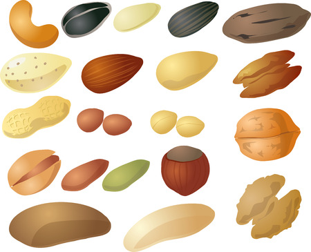 Various nuts and seeds, isometric 3d illustration: cashew, peanut, pecan, sunflower seed, hazelnut, walnut, pistachio, brazil nut
