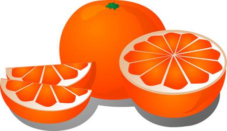 Cut orange illustration of orange cut into half and sections
