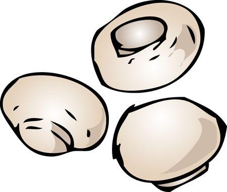 button mushroom: Button mushroom illustration edible fungus hand-drawn clipart