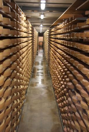 stored: Round stacks of cheese stored on shelves in factory warehouse