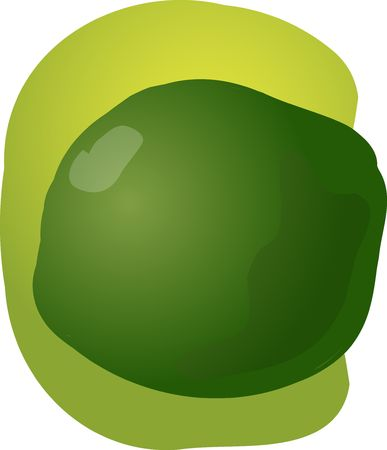 healthful: Sketch of whole fresh lime, fruit illustration