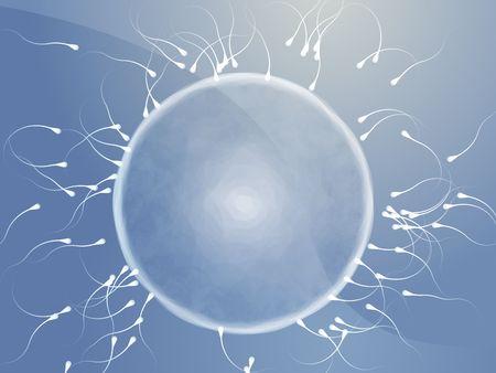 fertilized egg: Illustration of human egg cell being fertilized by sperm