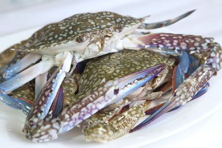 blue crab: Whole fresh raw king crab on plate