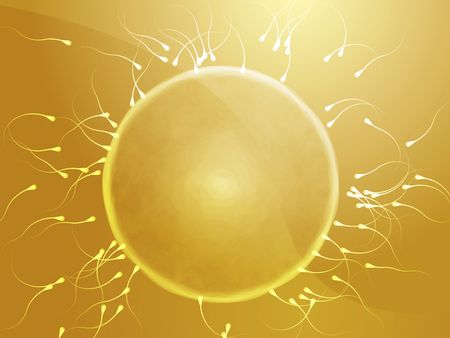 conceiving: Illustration of human egg cell being fertilized by sperm