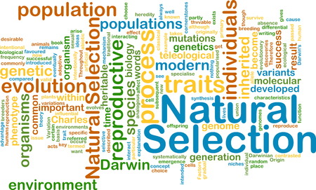 natural selection: Background text pattern concept wordcloud illustration of natural selection Stock Photo