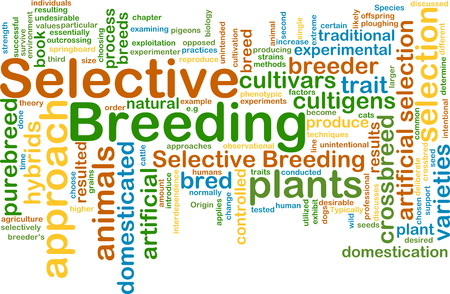 breeding: Background text pattern concept wordcloud illustration of selective breeding