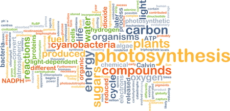 photosynthesis: Background concept wordcloud illustration of photosynthesis
