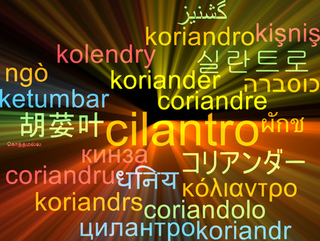cilantro: Background concept wordcloud multilanguage illustration of cilantro
