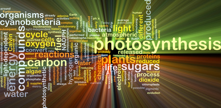 photosynthetic: Background concept wordcloud illustration of photosynthesis glowing light