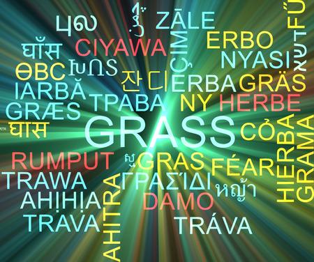 neon plant: Background concept wordcloud multilanguage international many language illustration of grass glowing light Stock Photo