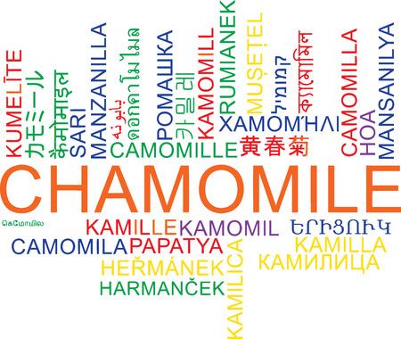 chamomile: Background concept wordcloud multilanguage international many language illustration of chamomile