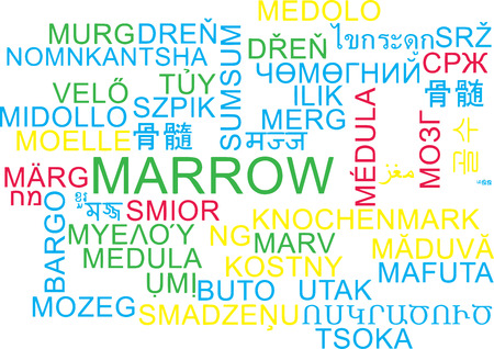 marrow: Background concept wordcloud multilanguage international many language illustration of marrow Stock Photo