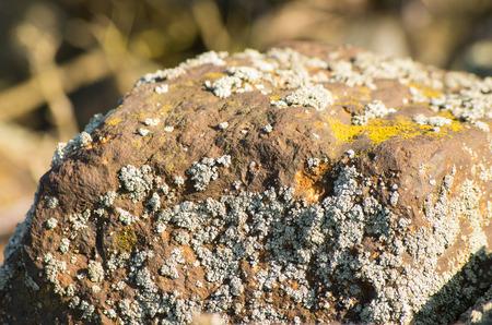 liquen: De piedra con liquen gris y amarillo