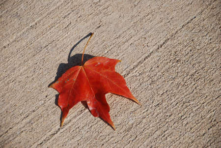 Autumn Sign. The lonely leaf lies on sidewalk is a symbol of autumn and loneliness.
