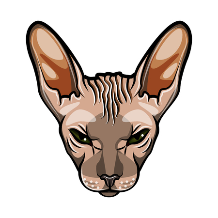 Domestic cat  face, Sphynx breed. Comic cartoon style  Vector illustration isolated on white background